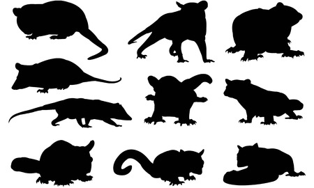 Images about possums on cartoon and clip art - WikiClipArt
