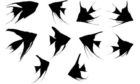 Angel Fish  silhouette vector illustration