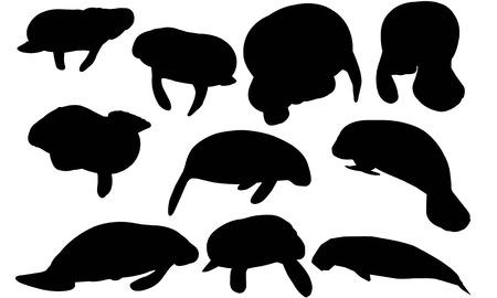 Manatee  silhouette vector illustration.