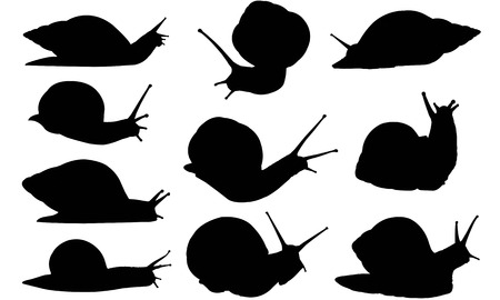 Snail  silhouette vector illustration