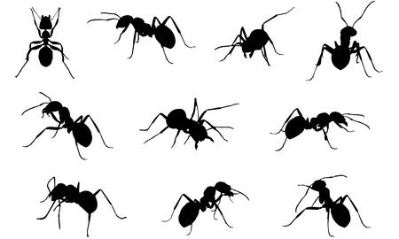 Ilustracja wektorowa sylwetka mrówka