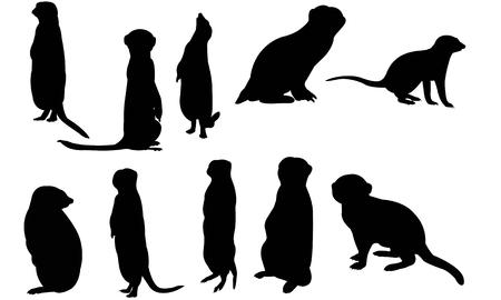 Meerkat silhouet vectorillustratie