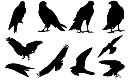Falcon silhouet vector illustratie Stock Illustratie