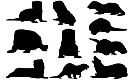siluet: Mink  silhouette vector illustration Illustration