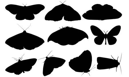 Moth  silhouette vector illustration Stock Illustratie
