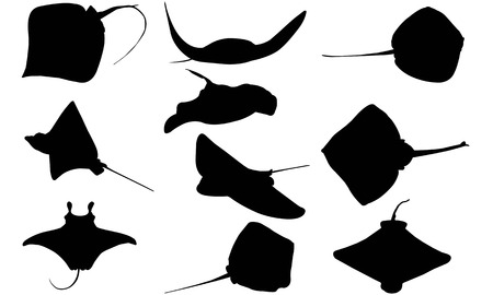 Ray silhouette illustration vectorielle Banque d'images - 82044626