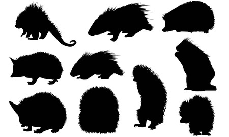Porcupine  silhouette vector illustration