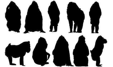 Mandrill  silhouette vector illustration