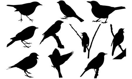 Nightingale  silhouette illustration. Illustration