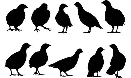 Partridge  silhouette vector illustration