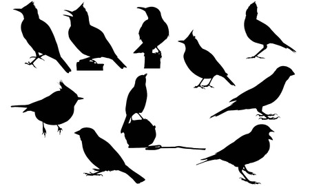 Lark  silhouette vector illustration