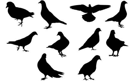 Illustration de silhouette de pigeon Vecteurs