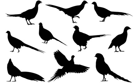 Pheasant  silhouette vector illustration