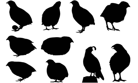 Quail  silhouette vector illustration Çizim