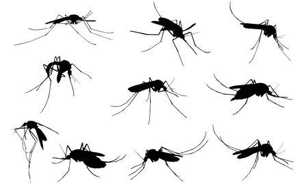 Mosquito  silhouette vector illustration Stock Illustratie