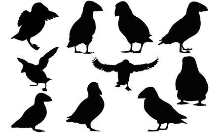 Puffin  silhouette vector illustration 免版税图像 - 82047709