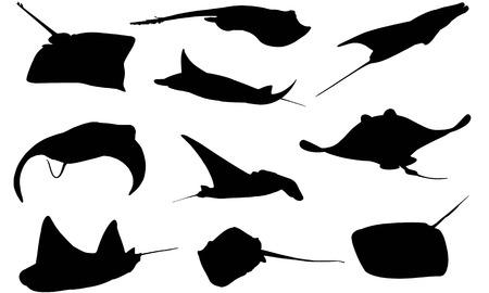 Manta Ray  silhouette vector illustration Banco de Imagens - 82047712