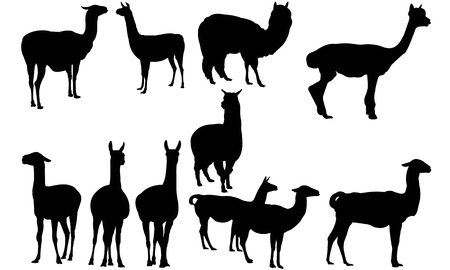siluet: Llama  silhouette vector illustration