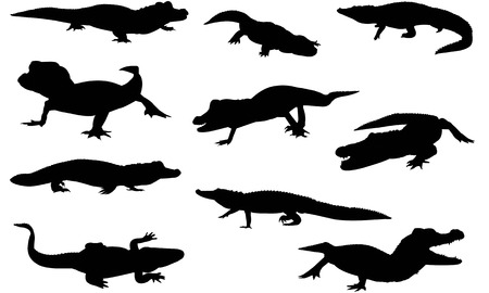 Aligator  silhouette vector illustration