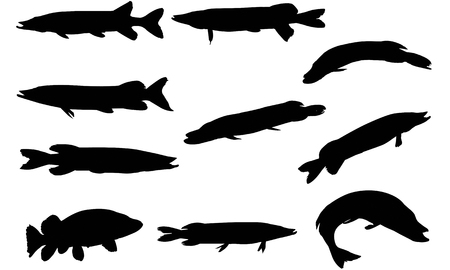 Pike  silhouette vector illustration Illusztráció