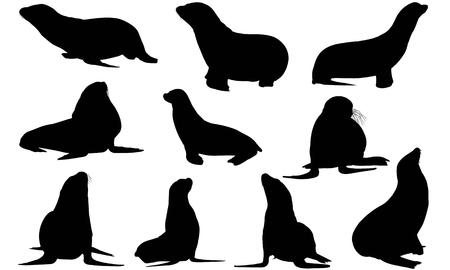 Pinniped  silhouette vector illustration Ilustração