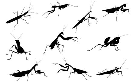 Praying Mantis  silhouette vector illustration Vectores