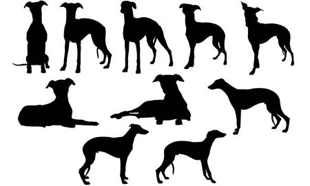 Whippet silhouette illustration Stock Illustratie