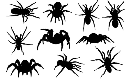 Trapdoor spider silhouette illustration Illustration