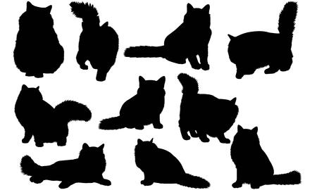 Birman Cat silhouette illustration