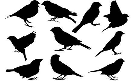 Sparrow silhouette illustration