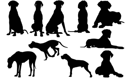 Great Dane Dog silhouette illustration
