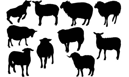 Sheep silhouette illustration