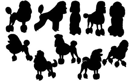 Poodle Dog silhouette illustration