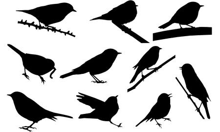 Warbler silhouette illustration