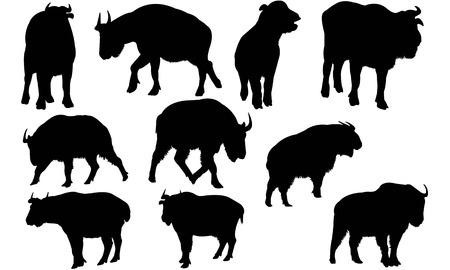Takin silhouette illustration