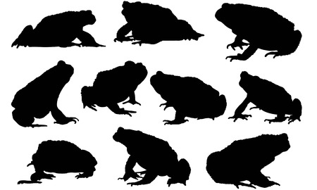 Toad silhouette illustration