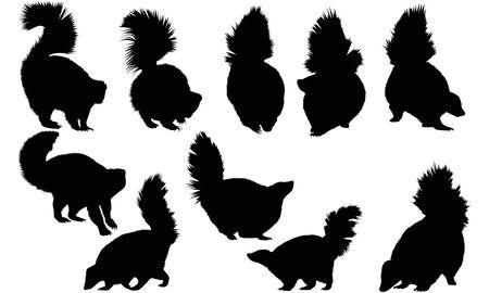 Skunk silhouette illustration