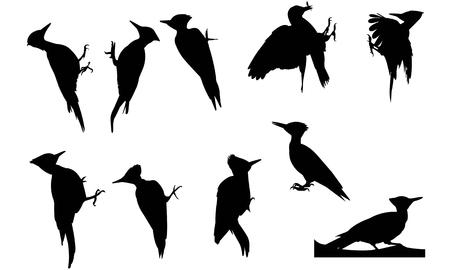 Wood pecker silhouette illustration Иллюстрация
