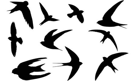 Swift silhouette illustration