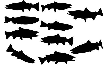 Steelhead trout silhouette illustration Vettoriali