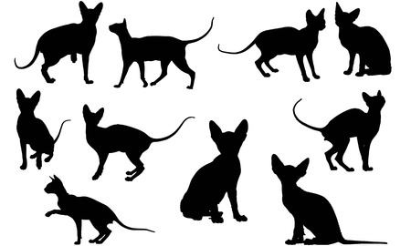 Sphynx Cat silhouette illustration
