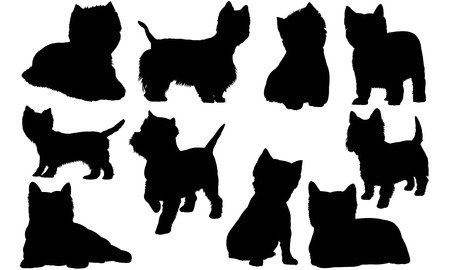 West Highland White Terrier silhouette illustration