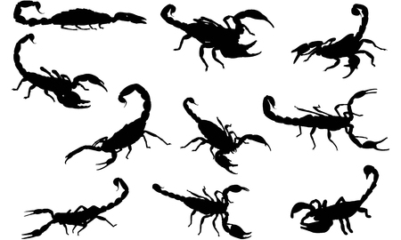 Scorpion silhouette illustration Illustration