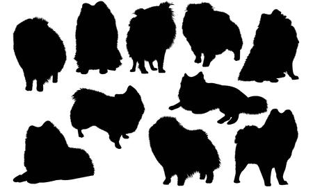 German Spitz Dog silhouette illustration Иллюстрация