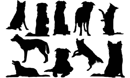 Border Collie Dog silhouette illustration  イラスト・ベクター素材