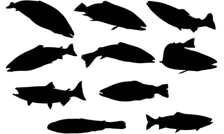 Salmon silhouette illustration  イラスト・ベクター素材