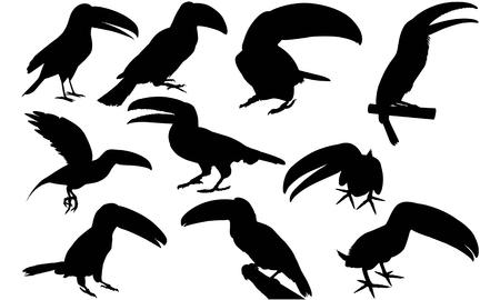 Toucan silhouette illustration