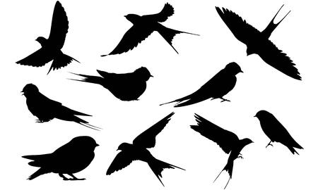 Swallow silhouette illustration