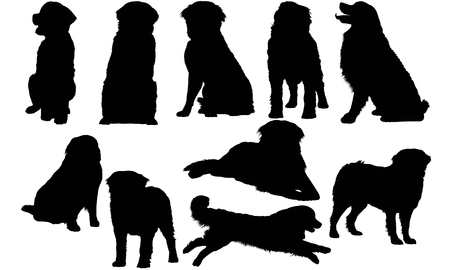 Bernese Mountain Dog silhouette illustration Vectores
