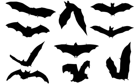 Vampire bat silhouette illustration